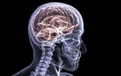 Concussion Culture