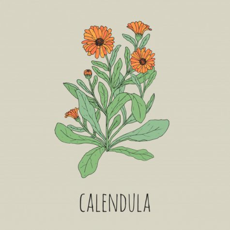 "Project Calendula is a new club aimed at improving wellness and mental health in the SHS community, and a wonderful resource for anyone adjusting to the ""new normal."""