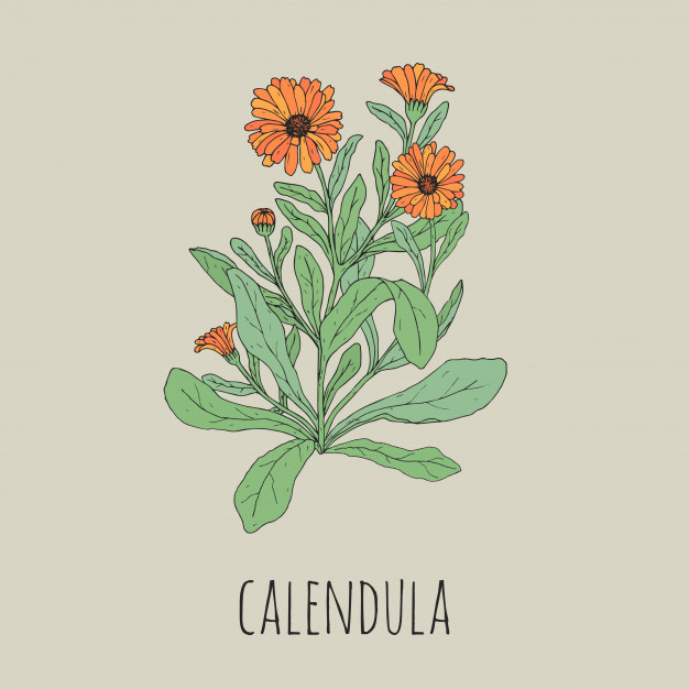 Project+Calendula+is+a+new+club+aimed+at+improving+wellness+and+mental+health+in+the+SHS+community%2C+and+a+wonderful+resource+for+anyone+adjusting+to+the+%E2%80%9Cnew+normal.%E2%80%9D